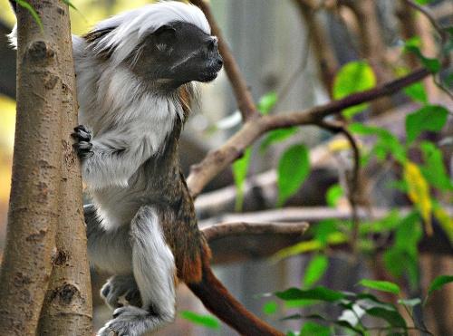 зоопарк на острове Коркеасаари (Korkeasaari)